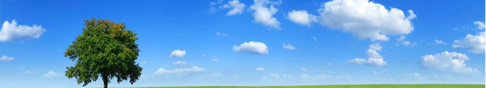Green tree blue sky